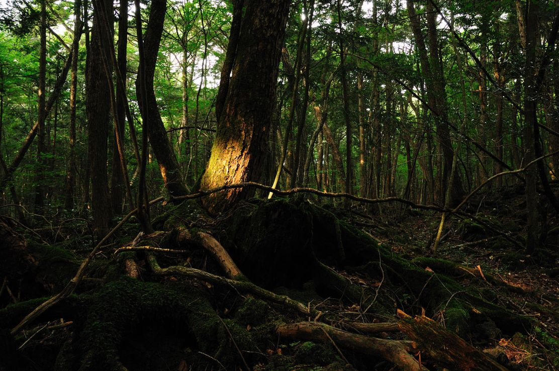 Aokigahara Forest, Creative Commons, Wikipedia